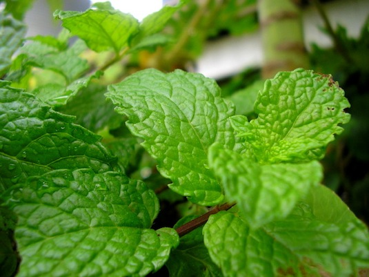 Cooking with the Edinburgh Eater: Mint