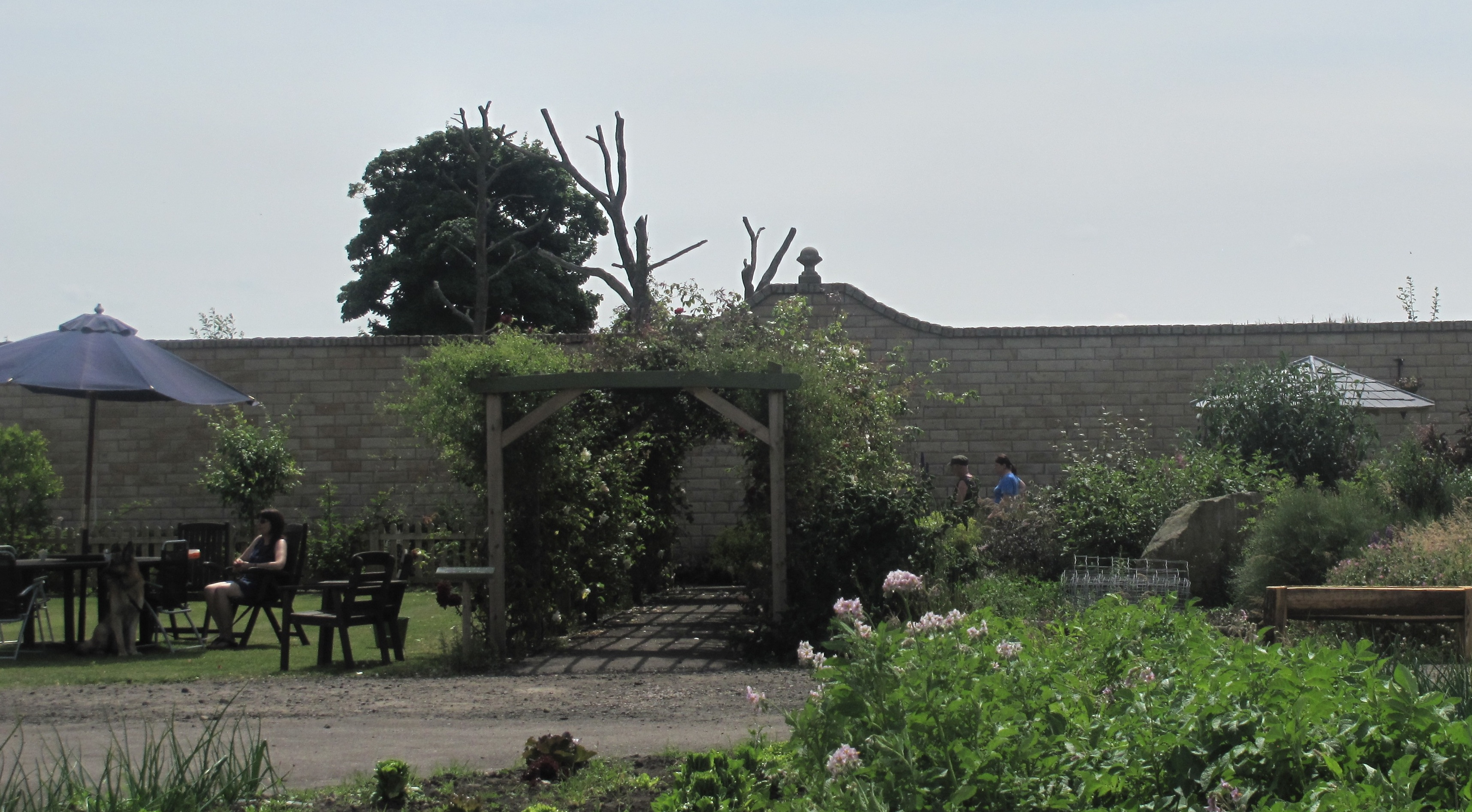 The_Walled_Garden_independent_cafes_Fife