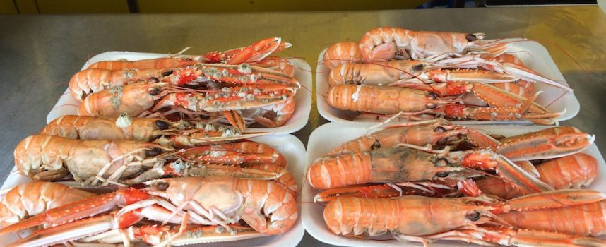 Buy locally-caught langoustines and lobster in Pittenweem