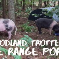 Sizzling prize to be won: Woodland Trotters