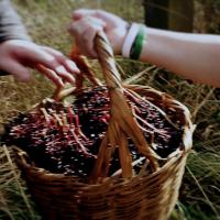 Aelder, a new Scottish liqueur made from elderberries