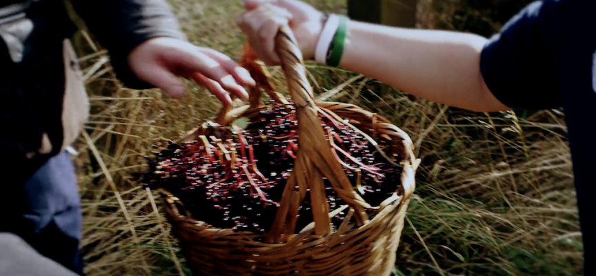 Aelder, a new Scottish liqueur made from elderberries