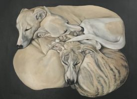 The Dog Show: stunning canine portraits at FSC this month